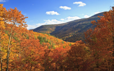 Fall Foliage in the Catskills