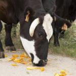Catskill Farms' Table to Farm Tours