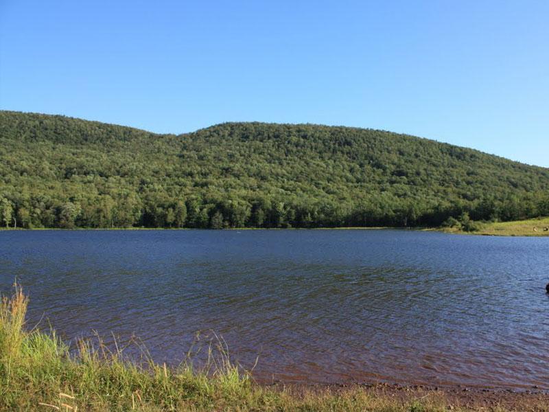Colgate-Lake-Wild-Forrest | AlbergoAllegria Bed & Breakfast | Catskills, NY