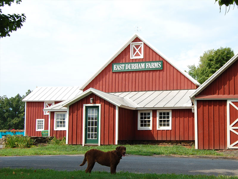 East-Durham-Farms | AlbergoAllegria Bed & Breakfast | Catskills, NY