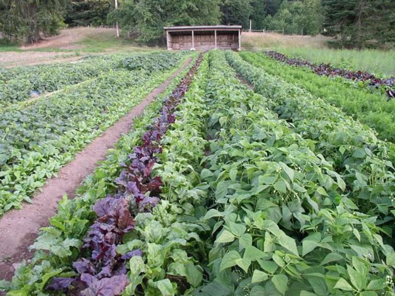 Foxglove-Community-Farm-img | AlbergoAllegria Bed & Breakfast | Catskills, NY