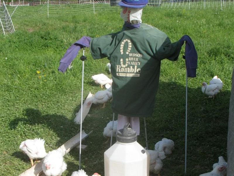 Heather-Ridge-Farm-img | AlbergoAllegria Bed & Breakfast | Catskills, NY