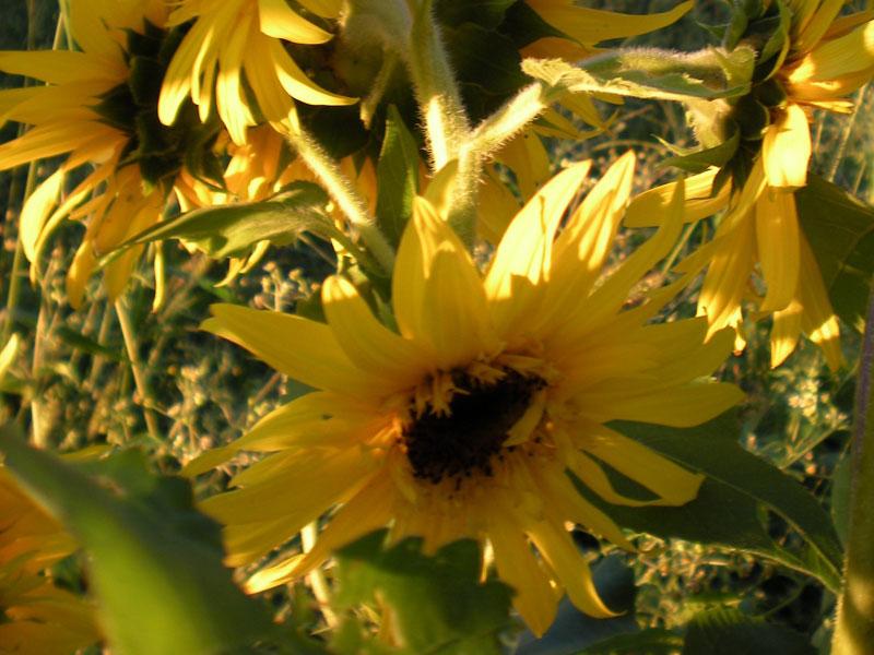 Maple-Glen-Farm-img | AlbergoAllegria Bed & Breakfast | Catskills, NY