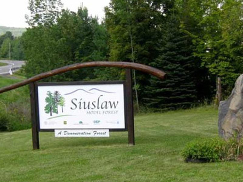 Siuslaw-Model-Forest | AlbergoAllegria Bed & Breakfast | Catskills, NY