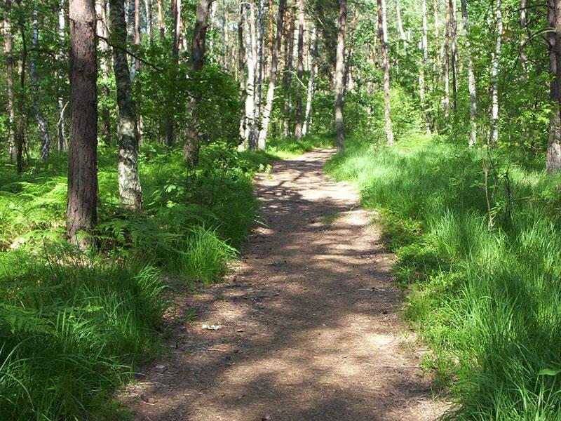 The-Elm-Ridge-Wild-Forest | AlbergoAllegria Bed & Breakfast | Catskills, NY