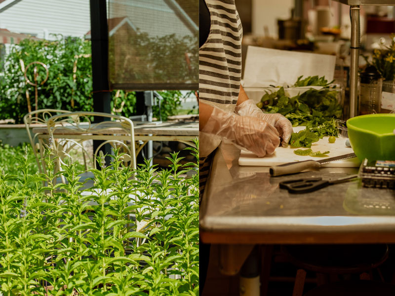 Seed to plate collage chair and food prep | AlbergoAllegria breakfast restaurant | Catskills, New York