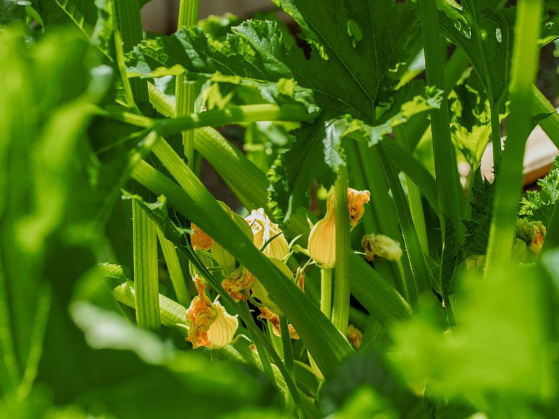 Seed to plate yellow flower | AlbergoAllegria breakfast restaurant | Catskills, New York