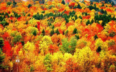 Top 10 Outdoor Catskills Activities